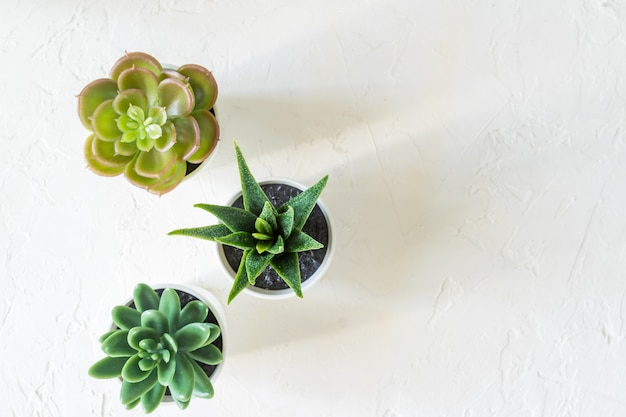 Top view of different small cacti in white pots on concrete background. interior decoration. copy space