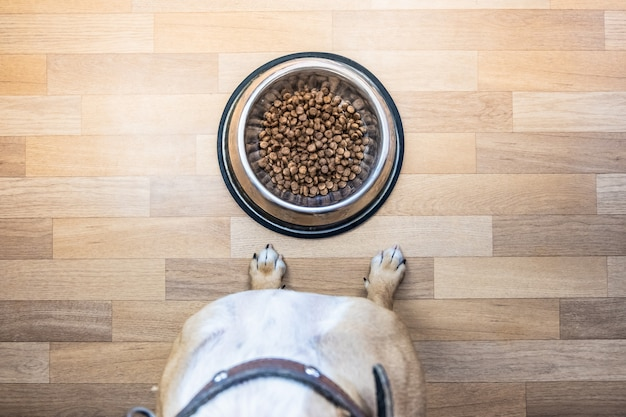 Top view of dog ready to eat food from the bowl. point of view of a puppy sitting in front of a bowl with food indoors.