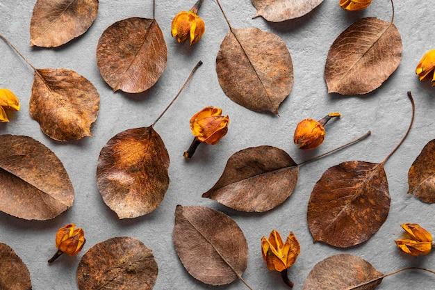 Vista dall'alto foglie secche