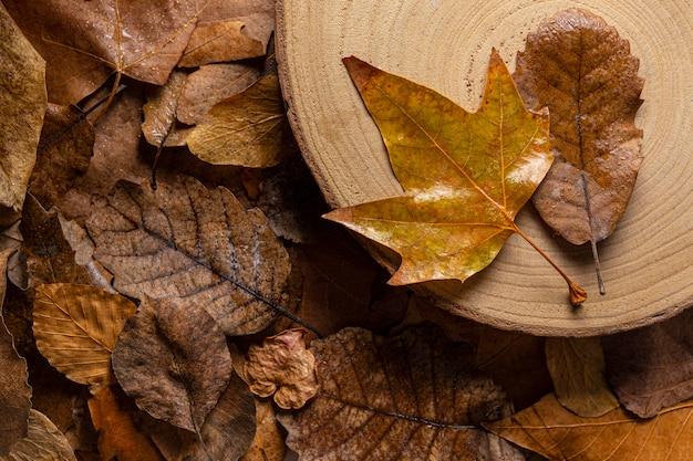 Вид сверху сухие листья