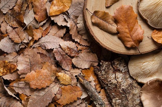 上面図乾燥葉