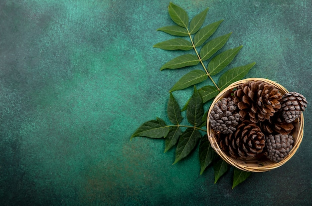 Top view of dry pine cones on bucket with leaves on green with copy space