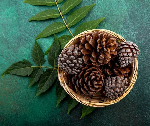 Top view of dry pine cones on bucket with leaves on green