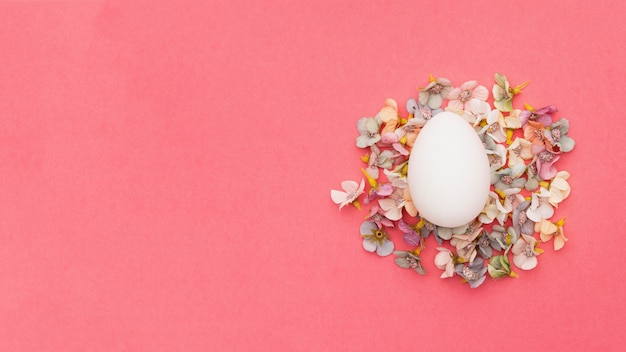 Top view egg on top of flowers petals