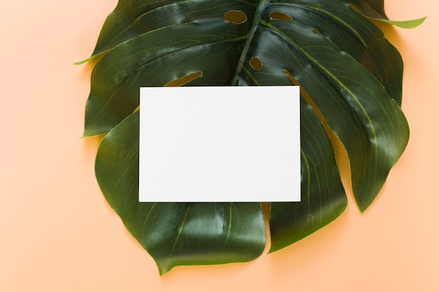 Top view empty business card on leaf