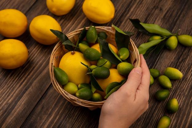 Vista dall'alto della mano femminile che tiene un secchio di frutta fresca come limoni e kinkan con limoni e kinkan isolato su una parete in legno