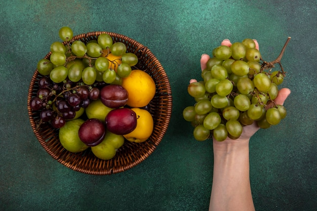Top view of female hand holding bunch of grape with basket of grapes pluots nectacots on green background