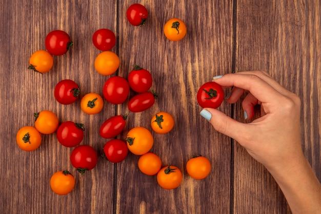Vista superiore della mano femminile che tiene un pomodoro di ciliegia rosso fresco con i pomodori isolati su un fondo di legno