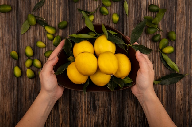 Top view of female hands holding a bowl of lemons with kinkans isolated on a wooden wall