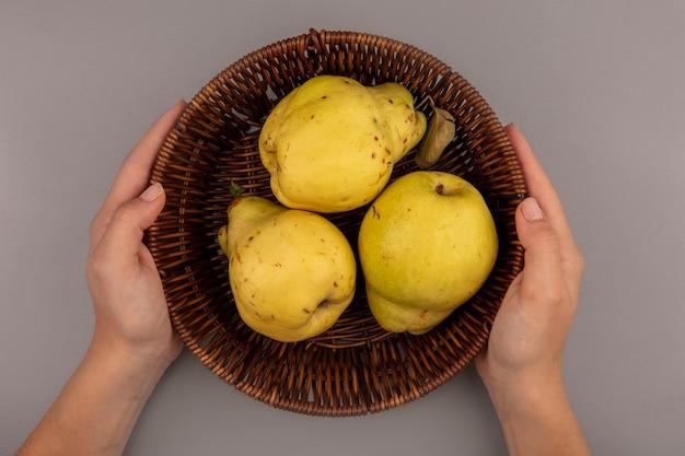 Vista dall'alto delle mani femminili che tengono un secchio di mele cotogne gialle fresche