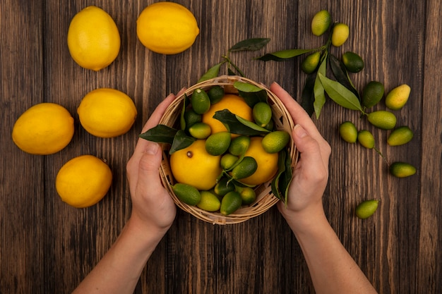 Top view of female hands holding a bucket of kinkans with lemons and kinkans isolated on a wooden background
