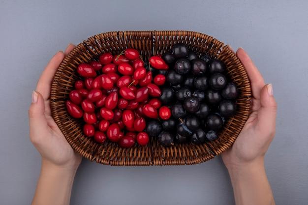 Vista dall'alto delle mani femminili che tengono un secchio con uva nera e bacche di corniolo su uno sfondo grigio