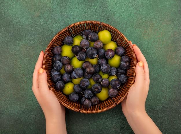 Vista dall'alto delle mani femminili che tengono un secchio con prugnole viola scuro con prugne ciliegia verdi su sfondo verde
