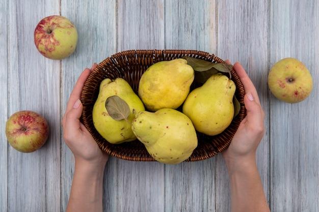 Vista dall'alto delle mani femminili che tengono un secchio con mele cotogne fresche su un fondo di legno grigio