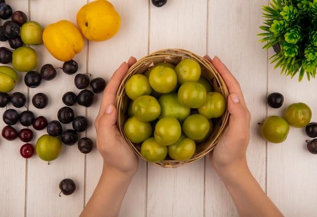 Vista dall'alto delle mani femminili che tengono un secchio con prugne ciliegia verdi con ciliegie rosse isolate su un fondo di legno bianco