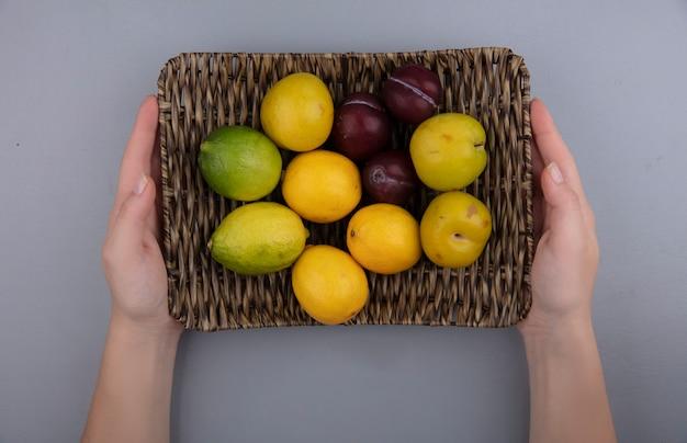 Vista dall'alto delle mani femminili che tengono un secchio con limoni e prugne su uno sfondo grigio