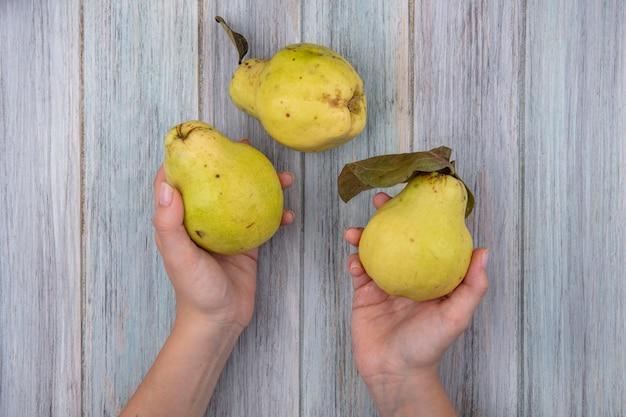 Vista dall'alto delle mani femminili che tengono mele cotogne sane su un fondo di legno grigio