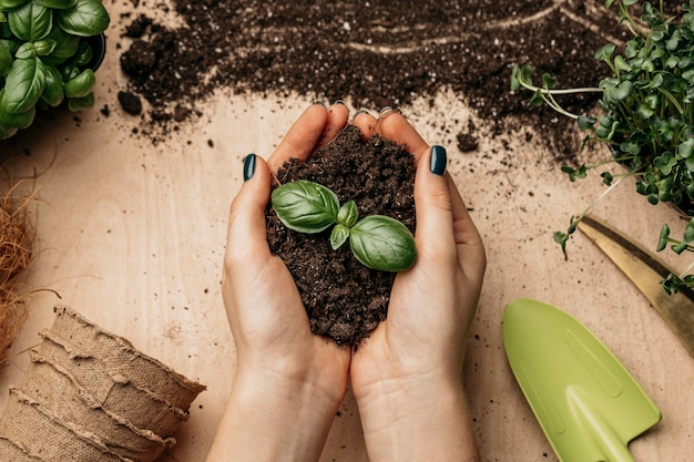 Top view of female hands holding soil and plant
