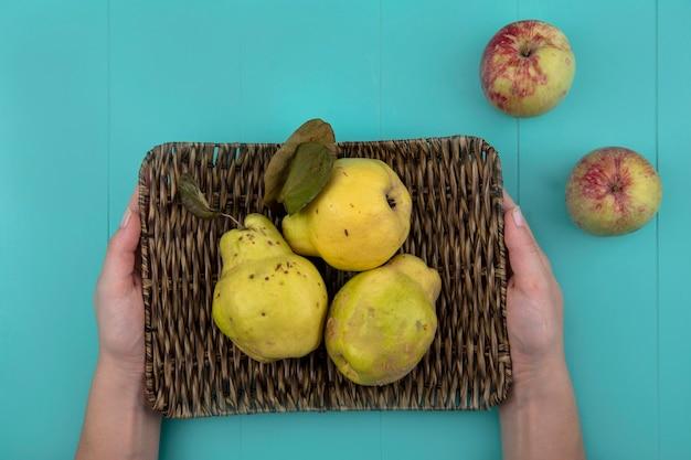 Vista dall'alto delle mani femminili che tengono un vassoio di vimini con mele cotogne fresche su sfondo blu