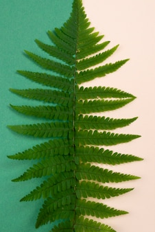Top view of fern leaf
