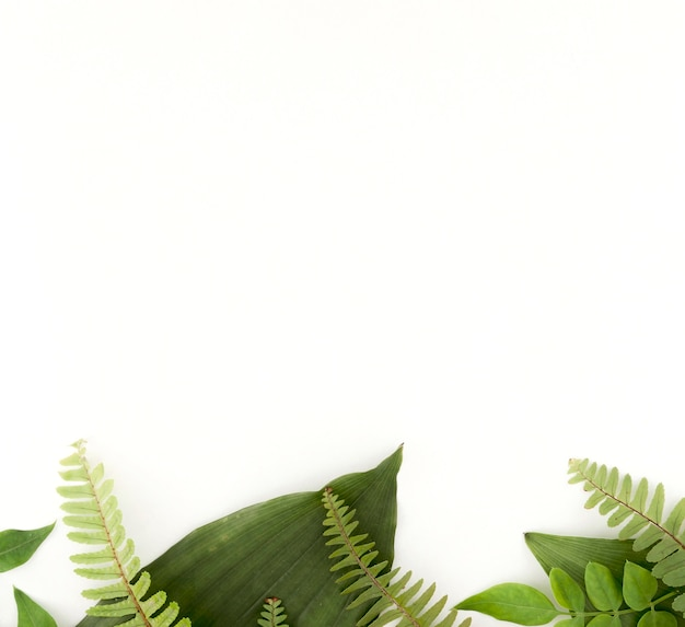 Top view of ferns and leaves with copy space