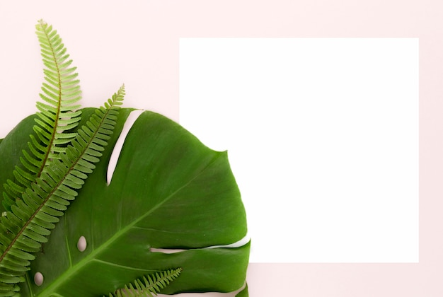 Top view of ferns and monstera leaf with copy space
