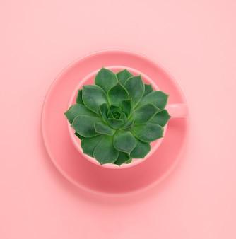 トップビューフラットパステルピンクのピンクのカップで緑のジューシーなレイアウト