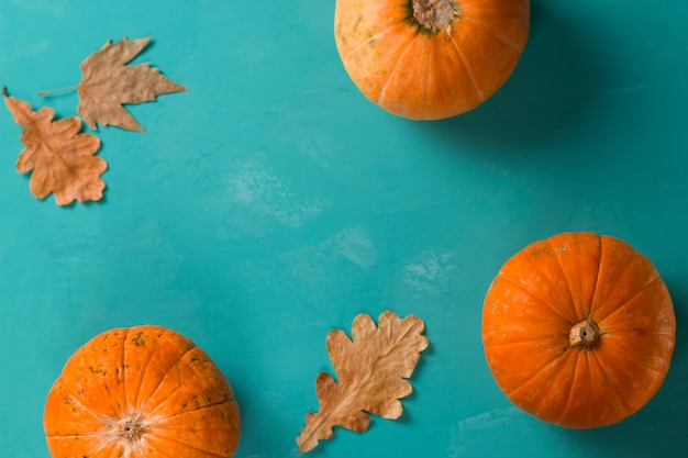 Top view flat lay three pumpkins on a blue background copy space, autumn background