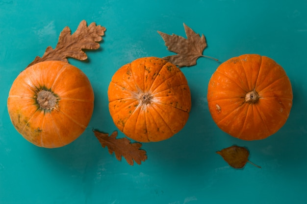Top view flat lay three pumpkins on a blue background