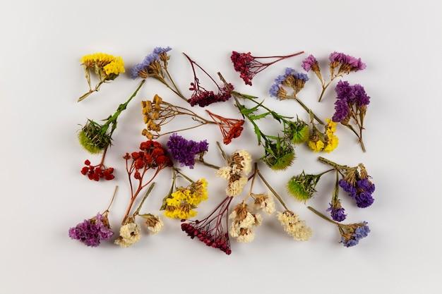 Цветочная коллекция с видом сверху