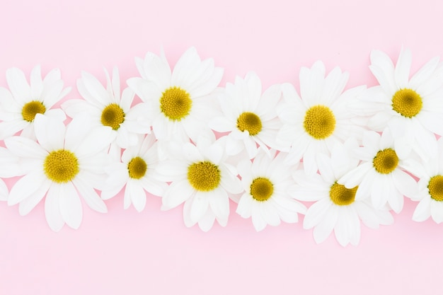 Top view floral decoration on pink background