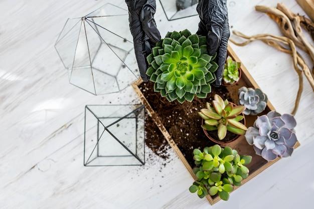 上面図花屋の女性の手は、ワークショップでガラスの植物相に地面と多肉植物を配置します