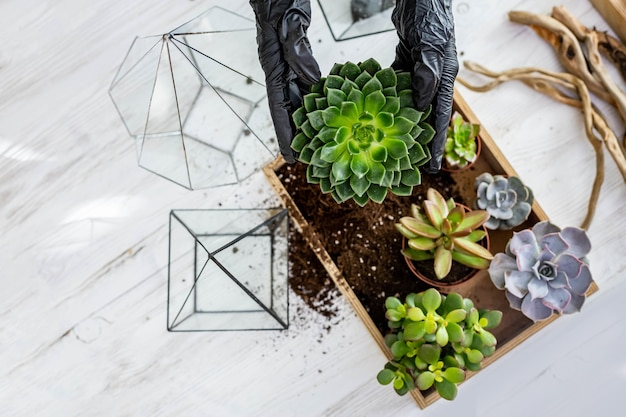 Top view florist female hands arrangement succulents with ground into glass florarium at workshop