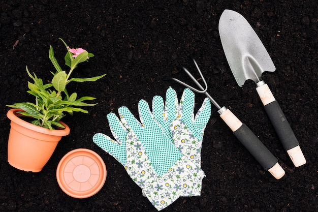 Top view flower pot and tools on soil background