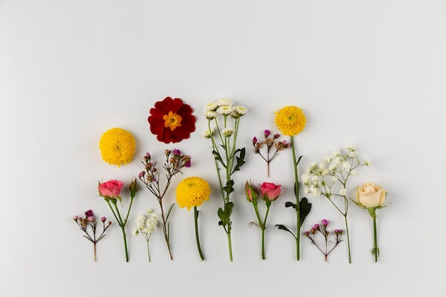 Коллекция цветов сверху на столе