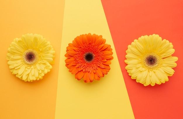Вид сверху цветы на столе