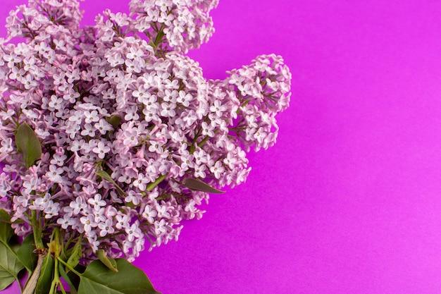 Вид сверху цветы фиолетовые красивые изолированные на фиолетовый