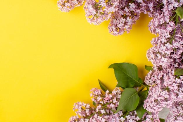 Вид сверху цветы фиолетовые красивые на желтом столе