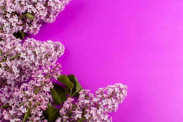 Вид сверху цветы фиолетового цвета, оформленные красиво на розовом фоне