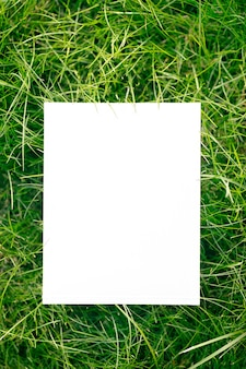 Top view of frame made of green garden grass and copy space on white background. green leaves with paper card. natural concept.