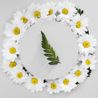 Top view frame made out of daisies