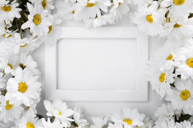 Top view frame surrounded by daisies