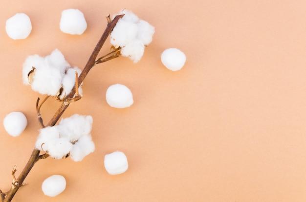 枝に綿の花を持つトップビューフレーム