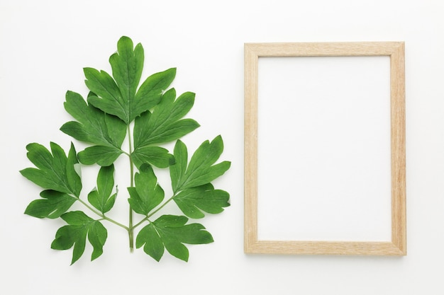 Top view of  frame with leaves concept