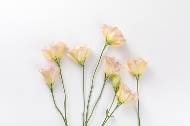Vista dall'alto di fiori freschi isolati su un muro bianco