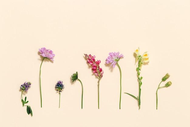 옅은 분홍색 배경의 신선한 초원 꽃과 잔디 여름 필드 식물의 상위 뷰
