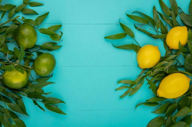 Vista dall'alto di limoni freschi gialli e verdi con foglie su blu con spazio di copia