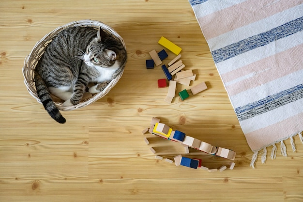 Top view funny little cat lying in straw basket on floor at childish room wooden stacked blocks toys