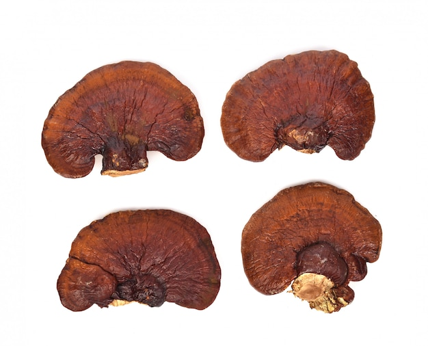 Top view of  ganoderma lucidum isolated on the white wall.
