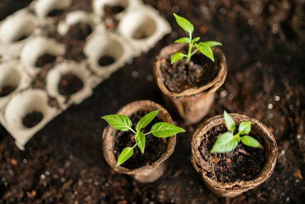 トップビューガーデニングツールと植木鉢